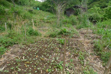 食糧危機に備える〜その0:自然栽培農業の話を聞く