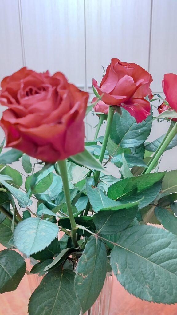 花を買いました