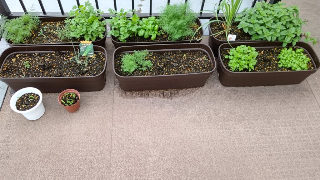 ハーブと野菜はここまで育ちました。